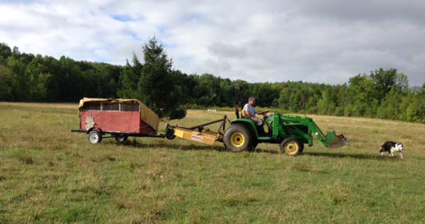 Moving the chicken tractor.